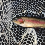 february 24 rainbow net